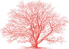 tartufi-gugliucciello-home-tree-o.png